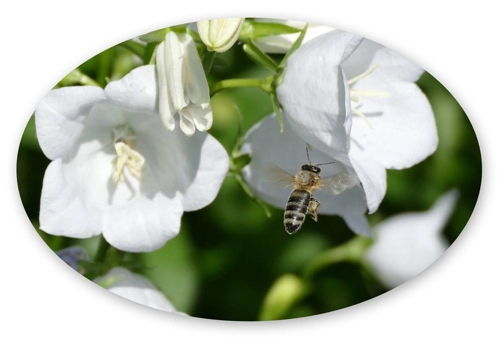 """Foto aus meinem Kinderbuch """"Die kleine Biene Summmalrum""""."""